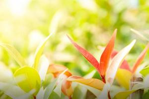 la naturaleza deja un fondo verde en el jardín en primavera bajo la luz del sol de la mañana. Fondo de pantalla de paisaje de plantas verdes naturales. foto