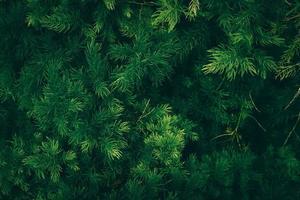 la naturaleza deja un fondo verde en el jardín en primavera. Fondo natural de follaje tropical oscuro. foto