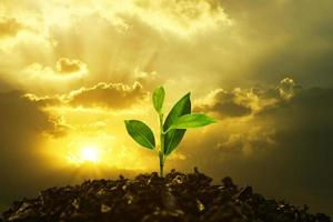 Young Plant Growing In Sunset. Save environment or Earth Planet World Concept. Mixed media. photo