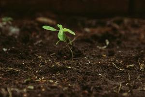 Young plant growing under sunlight photo