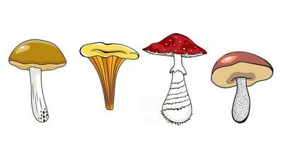 Vector set of mushrooms, autumn forest harvest. Chanterelle,  fly agaric, white mushroom, cep, orange-cap boletus, yellow boletus, rough boletus, saffron.
