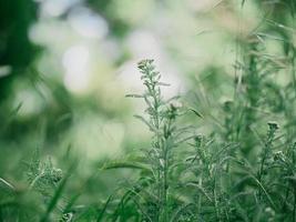 Tall green grass. Spring lawn. photo