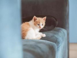 little fluffy cute kitten is sitting on the sofa photo