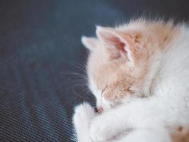 Young kitten red and white color is sleeping photo