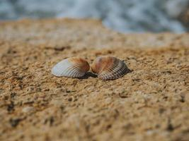 Two seashells in love on the sea stone on a sunny day photo