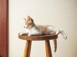 young kitten with beautiful blue eyes on a wooden chair photo