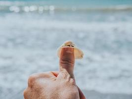 seashell on a male hand on a finger photo