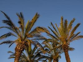 Perfect palm trees against a beautiful blue sky. Nature tropical trees photo