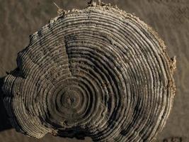 hermoso corte seco natural de un árbol. vista superior del tocón de madera foto