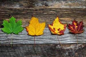 Four autumn colored leaves on wooden background close up photo