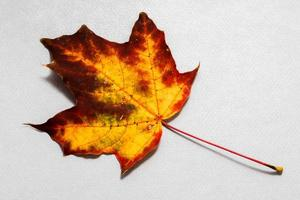 Autumn colored leaf on background from blue paper photo