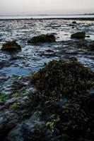 Seaside view with sea weed grass photo