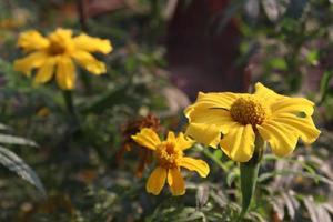 primer plano de flor hermosa de color amarillo foto