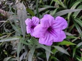 flor de color violeta con árbol verde foto