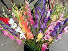 caldo de flores de varios colores en maceta foto