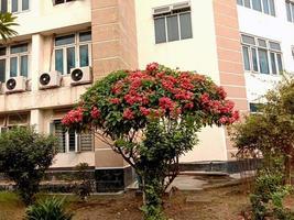 flor de color rosa en el árbol foto