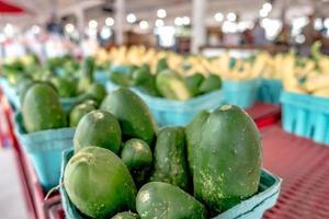 calabacín orgánico fresco cultivado en una granja local foto