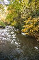pintoresco paisaje de virginia creeper trail en otoño foto