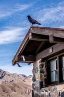 crow or raven perched up on an old hut in death valley photo