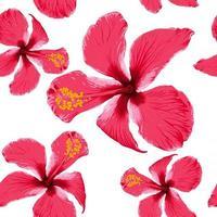 verano tropical de patrones sin fisuras con flores de hibisco rojo sobre fondo blanco aislado.ilustración vectorial dibujo a mano estilo acuarela seca. para diseño de tela. vector