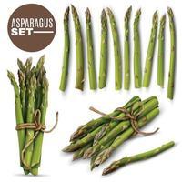Asparagus Realistic  Set Vector Illustration