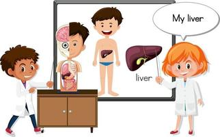 Young doctor explaining liver organ vector