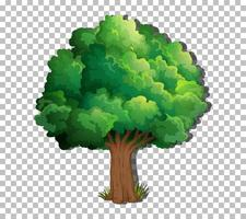 A tree isolated vector