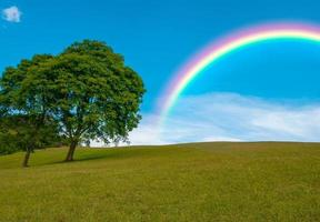 Trees and rainbow, beautiful colors in the blue sky photo