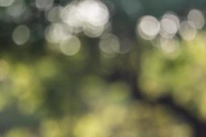 Bokeh natural green background photo