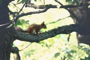 Squirrell sentado en la rama sobre fondo borroso bokeh foto