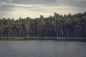 Bosque que crece a lo largo de la orilla del lago con agua ondulada oscura en luz brumosa foto