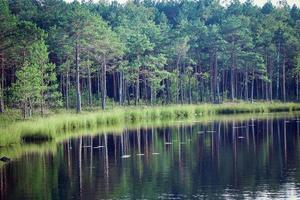 bosque que crece a lo largo de la orilla del lago con agua clara con reflejos foto