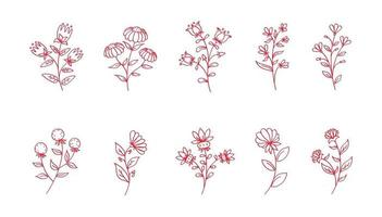 Vector flowers line art, pink flowers isolated, floral decoration