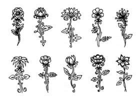 vector flowers set, black line art isolated on white background