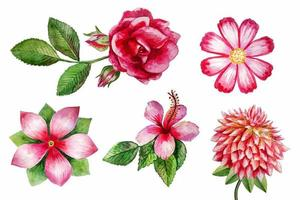 vector watercolor flowers isolated on white background
