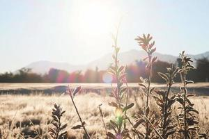 Grass in the frost. Frost on the grass in the morning sun. Winter natural plant background photo