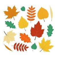 Collection of Colorful Autumn Leaves vector