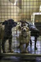 Abandoned and caged dogs photo