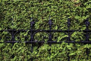Metal grating in a hedge photo