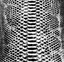 Vector snake skin background. Black and white texture