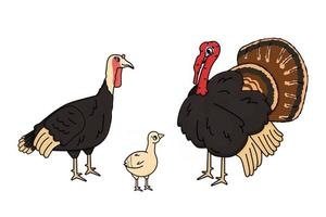 Vector cartoon outline family of turkey