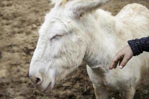 burro gracioso en una granja foto