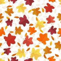 Maple leafs seamless background. vector
