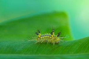 Macro worm slug green in nature photo