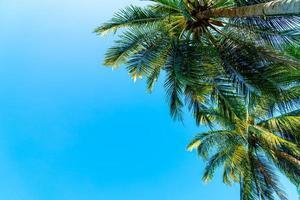 hermosa palmera de coco con cielo azul foto