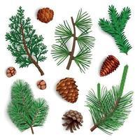 Pine Needle Cones Set Vector Illustration