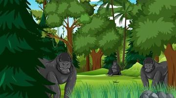 Gorilla group in forest or rainforest scene with many trees vector