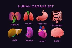 Human organ set design vector free