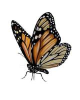 Butterfly from a splash of watercolor, colored drawing, realistic. Vector illustration of paints