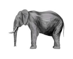 Elephant from a splash of watercolor, colored drawing, realistic. Vector illustration of paints